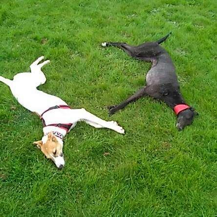 Francesco e Charlie Assistance Dog
